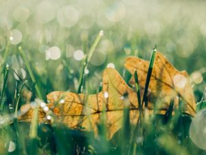 feuille nature inspirations